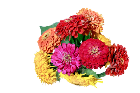 Image isolated on white background sunflower garden flowers and Zinnia