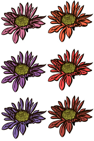 plant delicate: vector image of a beautiful autumn flower chrysanthemum