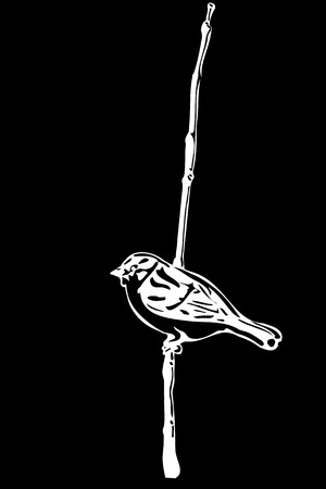 black and white  sketch of a little bird on a branch sparrow