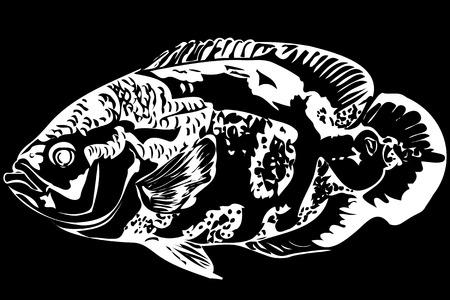 image of a beautiful aquarium fish Astronotus Ilustração
