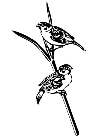 little one: black and white vector sketch of a little bird on a branch sparrow