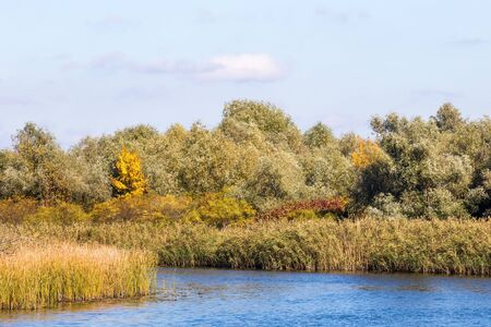 image of yellow trees in autumn by the river Stockfoto