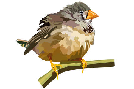 vector image of a small bird with a yellow beak sitting on a branch