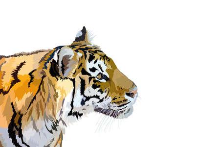 vector image animal predator adult striped tiger