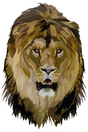vector image of an animal head, the king of beasts lion on a white background Illustration