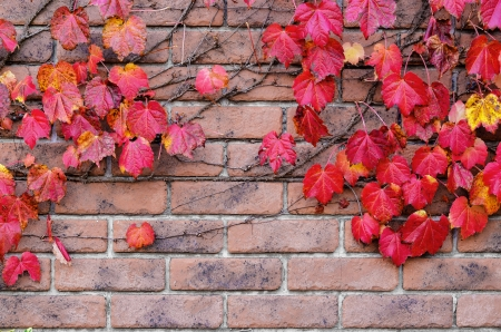 red leaves on brick wall photo