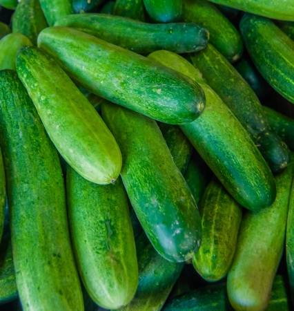 The cucumbers Stock Photo - 17421314
