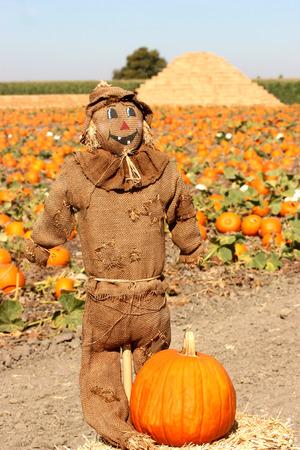 autumn scarecrow: Scarecrow on autumn pumpkin field Stock Photo