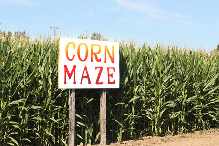 mazorca de maiz: Corn Maze letrero en campo de ma�z de oto�o Foto de archivo