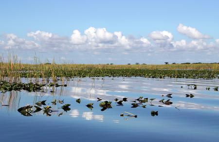 Waterlilies on wetland in Everglades Florida photo