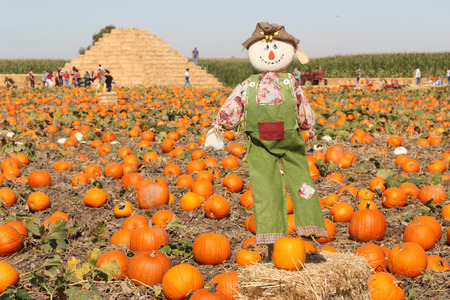 Scarecrow in autumn pumpkin field photo