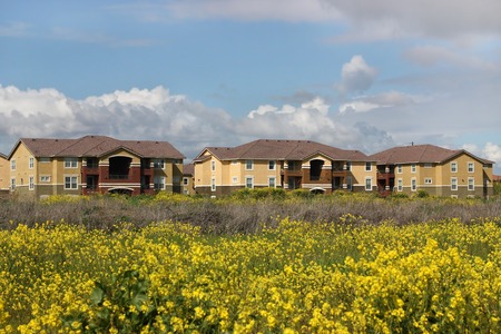 Row of apartments behind spring flower field