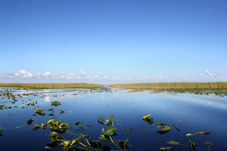 sawgrass: Everglades National Park in Florida Stock Photo