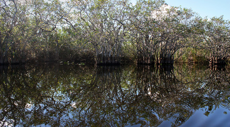 Reflection of trees in everglades wetland photo