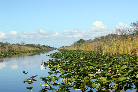 national plant: Everglades National Park in Florida Stock Photo