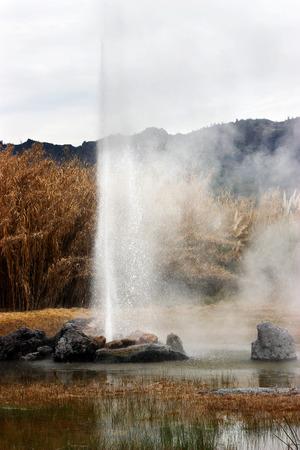 eruption: Geyser eruption in Calistoga, California.