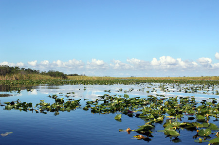 Everglades wetland in Florida Stock Photo