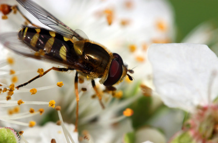 Close up of insect on spring blossom
