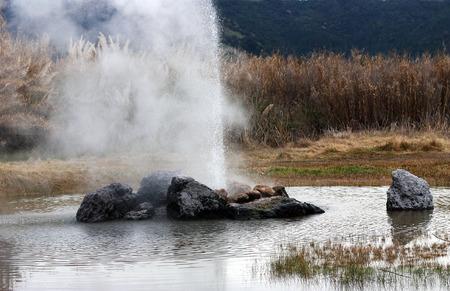 eruption: Geyser eruption in Calistoga California.
