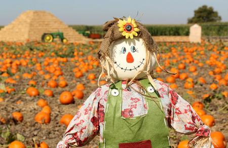 espantapajaros: Espantapájaros en campo de la calabaza de otoño
