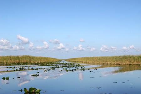 sawgrass: Scene of beautiful Everglades in Florida