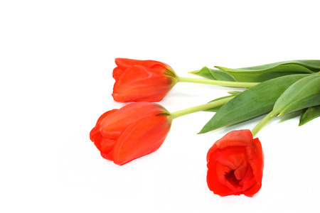 s day: Beautiful red tulips on white background