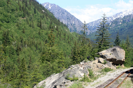 forest railroad: Old railroad in green forest