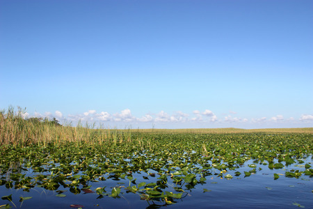 sawgrass: Beautiful scenery of lake in Everglades Florida Stock Photo