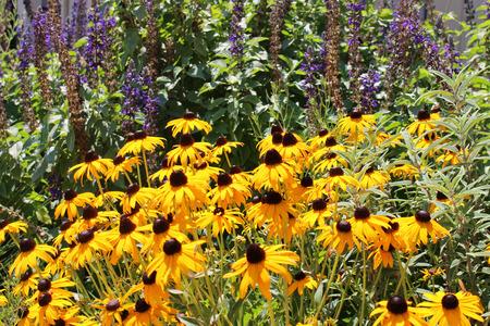 Wild flower garden 版權商用圖片