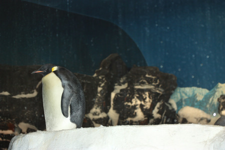 Lonely single pinguin on the cliff