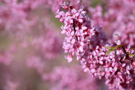 Beautiful pink blossoming flower background