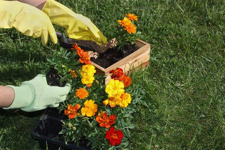 potting: Potting flowers in the garden Stock Photo