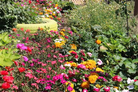 Bloemen en groenten tuin Stockfoto