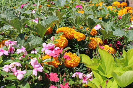 Flowers and vegetables garden Stock Photo