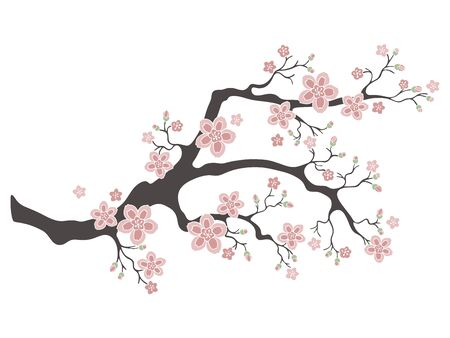 Sakura cherry blossoms. Pink cherry flower blossom branch, peach bloom, sakura branch. Blooming asian nature. Vector illustration.  イラスト・ベクター素材