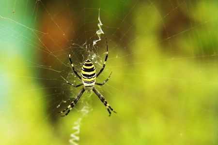 A spider spinning a network  photo