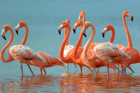 flamingo in Yucatan.