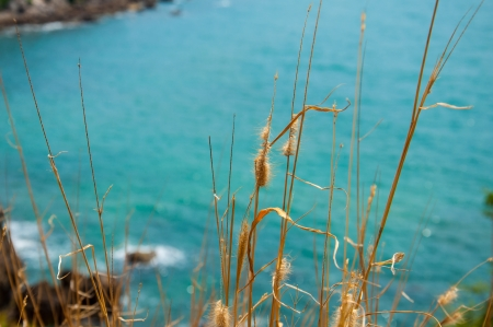swaying: Swaying Grass near cliff and sea background