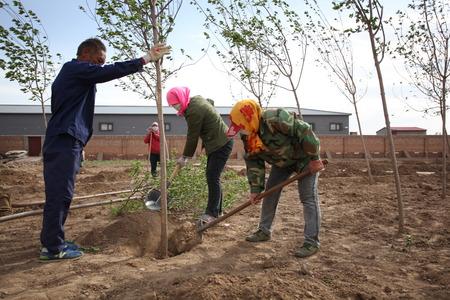 planting a tree: Tree planting Editorial