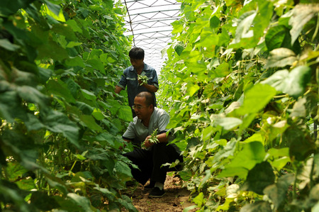 Hebei Xuanhua Science and Technology First Secretary in the village to help rural development
