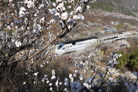 The train running, beside the road and laden with flowers Sajtókép