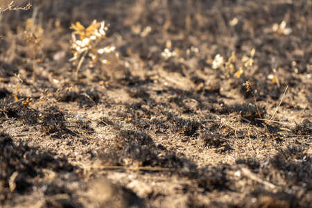 field with burnt grass and ashes after wildfire, damage ecology, forest fires