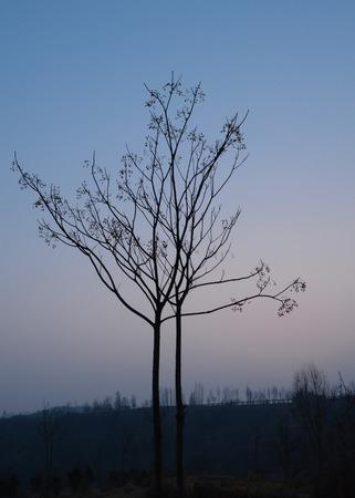 일몰시 나무의보기