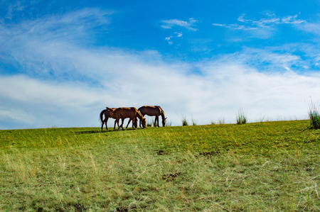 Prairie horses under blue sky and white clouds Stock Photo