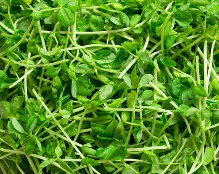 miao: snow pea shoots