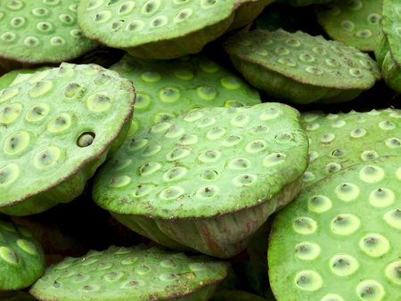 close up of lotus seed pods photo