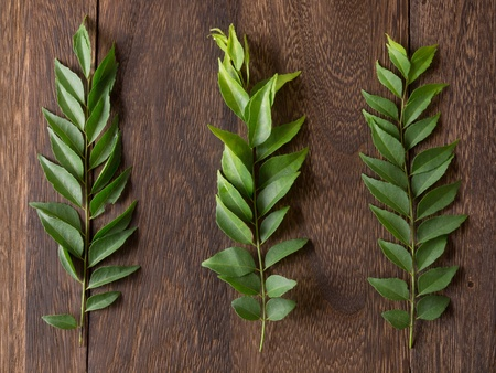 close up of  fresh indian curry leaves photo