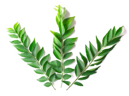 neem: close up of fresh indian curry leaves Stock Photo