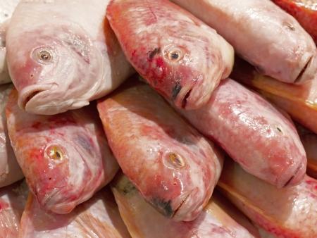close up of fresh tilapia fish Stock Photo - 16811100