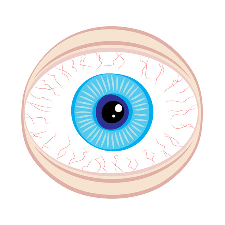 eyes wide open: wide eye security concept vector illustration